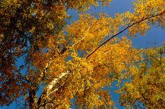 Fall in Alberta CA