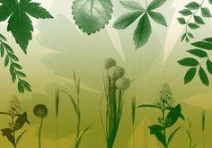 Nature2 Brushes