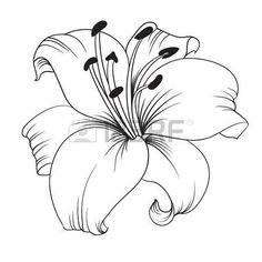 lily tattoo body art pinterest tattoo drawings and flowers. Black Bedroom Furniture Sets. Home Design Ideas