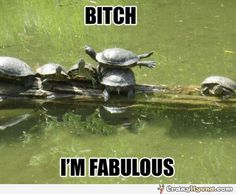 Please Excuse My Turtle Fabulousness. Hilarious animal picture of a urtle flying.