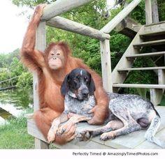 Une belle amitié ..... le chien meilleur ami de l'homme .... ça date pas d'hier!