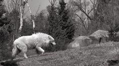 Toronto Zoo - April 10/14   Flickr - Photo Sharing!