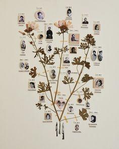 MAISSA TOULET • arbre généalogique  #collage
