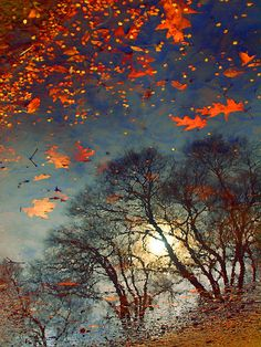 The Magic Puddle ~ autumn, water reflection of trees with light shining through the branches and fallen leaves by Tara Turner Water Reflections, All Nature, To Infinity And Beyond, Belle Photo, Autumn Leaves, Fall Trees, Fallen Leaves, Beautiful World, Mother Nature