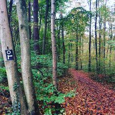 Kölnpfad Etappe 7 - Von Schlebusch vorbei an der Diepeschrather Mühle nach Thielenbruch  Wer Lust hat auf einen herbstlichen #Raschelspaziergang, dem sei diese Etappe des #Kölnpfad ans ❤️ gelegt. 🍂🍁🍂🍁 Auf 12 Kilometern geht es hauptsächlich durch den #Wald, oft auf schmalen Trampelpfaden, dafür aber besonders idyllisch. 🌳🌿🍃🍁🌲 Zwei Tipps: 1. Unbedingt festes Schuhwerk anziehen, es kann auch mal rutschig und schlammig werden. 2. Nehmt die Wanderkarte oder den Wanderführer vom…