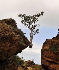 arbre en danger