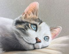 Learn how to draw a cat with pastels in this lesson that uses pastel pencils and traditional soft pastels. Pastel Portraits, Pastel Paintings, Pastel Art, Drawings Of Cats, Animal Drawings, Pastel Pencils, Colored Pencils, Pastel Drawing, Painting & Drawing