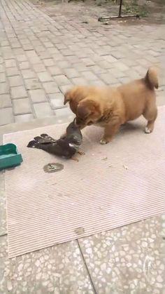 Animal Jokes, Funny Animal Videos, Really Funny, Animal Drawings, Animal Photography, Pet Adoption, Cute Animals, Puppies, Pets