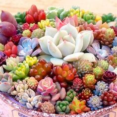 100 pcs/pack Real mini succulent Seeds cactus seeds rare perennial herb plants bonsai pot flower seeds indoor plant for home Cactus Seeds, Succulent Seeds, Succulent Gardening, Cacti And Succulents, Planting Succulents, Container Gardening, Planting Flowers, Succulent Planters, Indoor Gardening