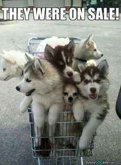 A shopping cart  full of pupoy love