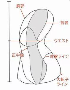 正面以外から見た背骨 背骨は一見すると一番簡単なパーツに見えますが、他の部位が繋がるため一番のメインパーツです。背骨のアタリを取る際に、まっすぐな直線を背骨に見立てて描いている人をよく見ますが、正面以外で直線のアタリで取った場合、どんな意味があるアタリなのかわからなくなってしまいます。胸郭部の部分で説明したように、背骨は決して直線ではありません。正面以外から見た背骨はS字型に近いしなり方をしています。 S字背骨はどこまでなのか 一般的に背骨は股まで繋がっているイメージですが、S字で言われている背骨の部位は股まで伸びていません。おしりの割れ目の中心辺りで止まり、骨盤部が股まで伸びているのです。 背骨を描いたら胸郭を描く 胴体の角度が変わってもやることは同じです。簡略化した胸郭を背骨に乗せてみましょう。胸部は見る角度によって形が変わってくるので注意してください。 肋軟骨のアタリを描く 胸骨を引き、肋軟骨のあたりを描いていきます。正面同様、肋軟骨のアタリの終わりがウエストラインになります。 腹部のアタリ 腹部のアタリを描いて行きます。角度が変わることにより片側の腹斜筋はほぼ見え...
