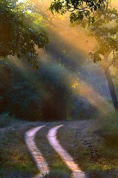 sun rays over a quiet road.