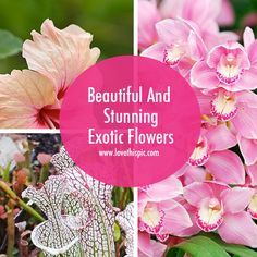 Beautiful And Stunning Exotic Flowers flowers floral flower pictures exotic flowers