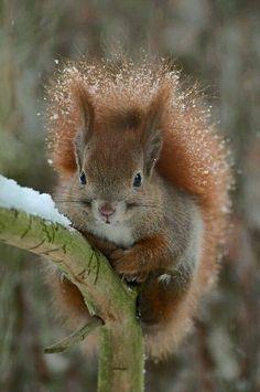 Cute little squirrel