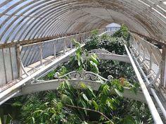 The Palm House, Royal Botanic Gardens, Kew