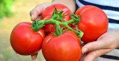 Nu-și mai încap în piele! Home And Garden, Mai, Vegetables, Cooking, Paradis, Food, Solar, Gardening, Diversity