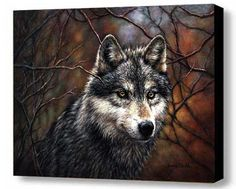"""Timber Wolf"" -By Donna Walsh    Limited Edition Canvas Art Reproduction,  signed and numbered, gallery wrapped, ready to hang.  The art comes to you gallery wrapped and ready to hang--no additional   framing is necessary. Each piece is UV coated, waterproof, and  is accompanied by a certificate of authenticity. http://www.indianvillagemall.com/donnawalsh.html"