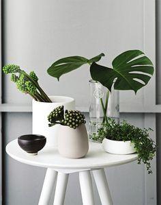Zakkia - The Design Files Diy Interior, Interior Stylist, Interior Decorating, Interior Design, Green Plants, Tropical Plants, Pots, Low Light Plants, The Design Files
