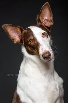 Bilma and Lotti - Portrait and Pet Photography by Elke Vogelsang, Hildesheim