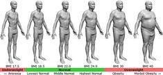 Diet Calculator, Body Fat Calculator