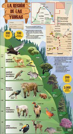 Infografía de las Yungas. Descubrí la flora y la fauna según el terreno y la…