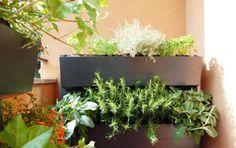 Annoverato fra i divisori verdi PRATICO Wall up è la soluzione per il terrazzo urbano ma anche per il giardino d'inverno