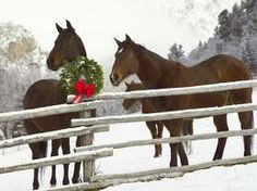 Merry Christmas and a Happy New Year Horses
