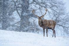 Richmond Park, Near London - 19 Breathtaking Photos of Winter Wonderlands Around the World - My Modern Met