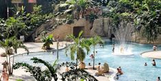 Tropical World Germany Lagoon Palm Pools Rainforest Tropical plants - Travel Plans Tropical Plants, Trip Planning, Swimming Pools, Berlin, Travel Destinations, Germany, The Incredibles, Beach, Places