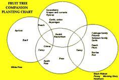 Fruit tree companion planting chart