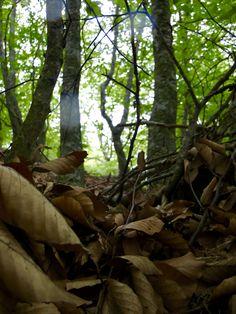 Cholomontas forest #Chalkidiki