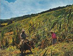 La Réunion lontan : 12 photos d'une nature préservée | Réunionnais du Monde - Ile de la Réunion