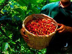 Do you smell that? It's the smell of freshly harvested #organicfood ! The #Organic boom has reached Peru! The fresh vegetables, fruits and seeds of the region are happy to be part of your new diet! // ¡Los alimentos ecológicos están de moda! Perú no se escapa del boom de la sana alimentación y sus productos orgánicos no podrían estar más felices. ¡Viva el Perú orgánico!