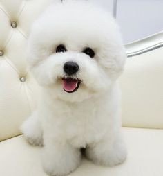 great smile cute puppy