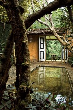 Jungle garden courtyard with pool