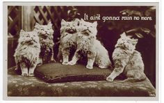 Antique Old Real Photo Cat Postcard Kittens [100565] - $8.99 : Old Postcards In Time, Online source for old and antique postcards