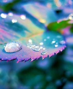 shares Facebook Twitter Google+ Pinterest StumbleUponHave you noticed everything around you comes alive after a shower of rainfall? This lovely effect is no doubt because rain has the capacity to make everything look more verdant, vibrant and clean. But there is more – it is the way cute water drops seem to make everything appear jeweled and shining that adds to the charm of the scenario. Is it then any wonder that artists have found this inspiring and have worked at capturing this aspect in…