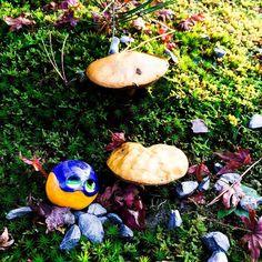 Meet mushrooms 🍄 on
