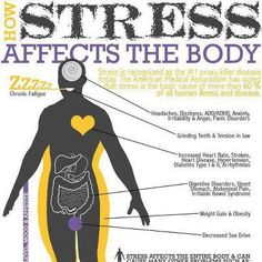 Stress can be worse for your health than a junk food diet!