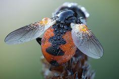 Fotos macro de insectos por John Hallmen - Antidepresivo