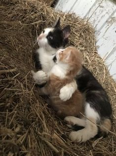 Cats, Kittens, Funny Cats, Gatos, Cat, Kitty, Kitty Cats