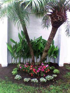 Palmera rubelina con duranta y piedra de rio jardines for Como iniciar un vivero en casa