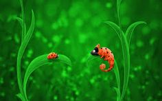 iCanvas Kids Children Lady Bug and Chameleon Canvas Wall Art Timeline Cover, Timeline Photos, Canvas Wall Art, Canvas Prints, Hd Backgrounds, Desktop Wallpapers, Latest Wallpapers, Cartoon Images, Bug Images