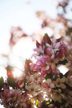 Flowers – Saipua Winter Wedding Flower Inspiration, Winter Wedding Flowers, Early Spring Flowers, Grape Color, Heirloom Roses, Spring Aesthetic, Most Beautiful Flowers, Fake Plants, Flower Farm