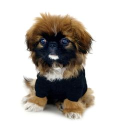Hello, my name is Violette. My mother is a monkey and my father is a lion.  Cotton Dog Tee by #AmericanApparel.  #dog #pet