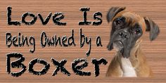 Boxer Wood Plaque Dog  Pets Animal Dogs Sign Wall Art Pet Gift