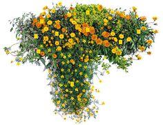Balkon-Ideen: Balkonkästen bepflanzen dreimal anders - Sonnenseite mit Pflanzen in Gelbtönen