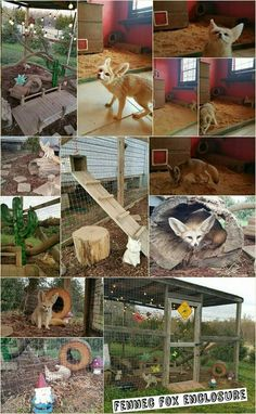 how to build a fox enclosure