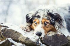 I want more snow! by KristynaKvapilova.deviantart.com on @DeviantArt