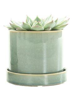 Op zoek naar Green lifestyle store Echeveria plant met deep forest pot ? Ma t/m za voor 22.00 uur besteld, morgen in huis door PostNL.Gratis retourneren.